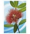 Pohutukawa Flower: Card
