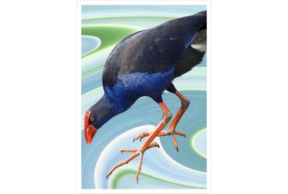 Wading Pukeko: Card