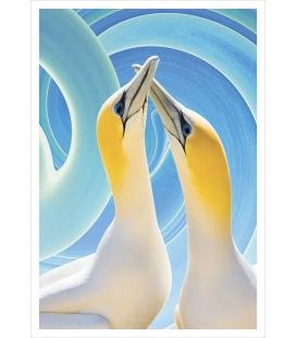 Gannet Couple: Card