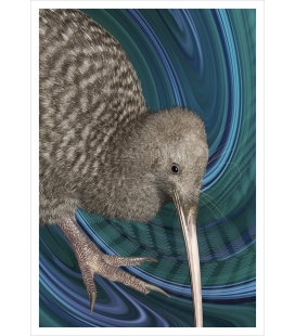 Great Spotted Kiwi: Card
