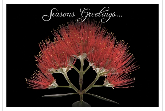 Pohutukawa Flower (Seasons Greetings): Card