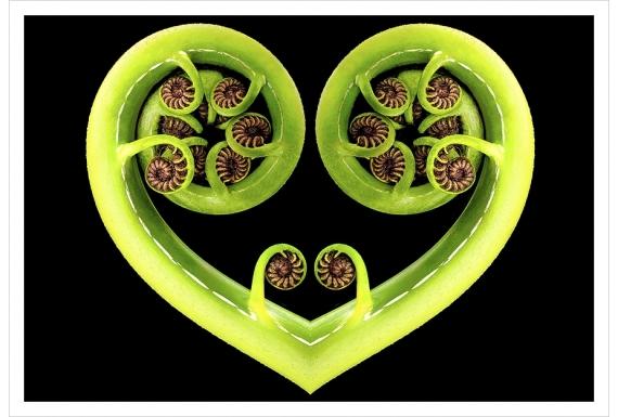 Koru Heart: Card
