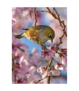 Silvereye & Cherry Blossom