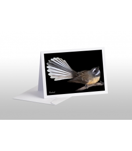 Fantail: Card
