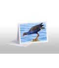 Pukeko on Rock: Card
