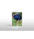 Pukeko in Reeds: Card