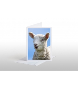 Happy Lamb: Card
