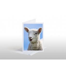 Happy Lamb: Card