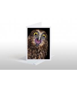 Screeching Ruru (Morepork): Card