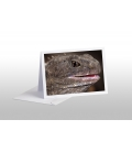 Living Fossil, mature Tuatara: Card