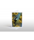 Tui in Kowhai, Point Wells: Card