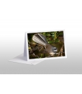 The NZ Fantail, Piwakawaka: Card