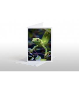 NZ Green Gecko: Card