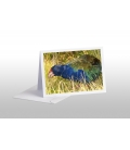 Grazing Takahe: Card