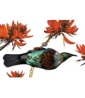 Tui in Flame Tree