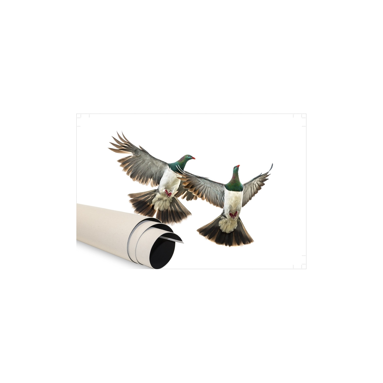 beautiful kereru couple in flight kereru couple in flight with fly lustre with boule japonaise fly. Black Bedroom Furniture Sets. Home Design Ideas
