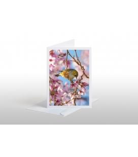 Silvereye, Waxeye (Tauhou): Card