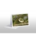 Rifleman, NZ's Smallest Bird: Card
