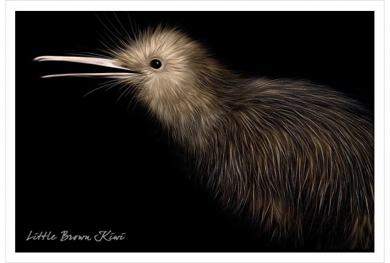Brown Kiwi: Card
