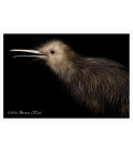 Little Brown Kiwi: Card