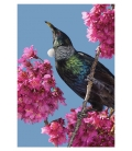 Tui in Cherry Blossom: Card