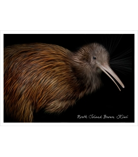 North Island Brown Kiwi: Card