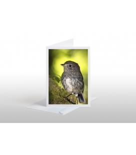 North Island Robin, Toutouwai: Card