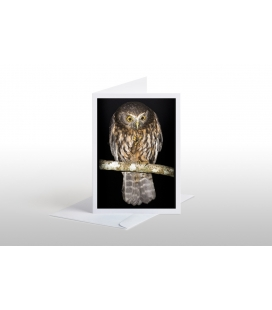Morepork (Ruru) with Weta: Card
