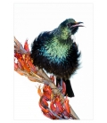 Singing Tui: Card