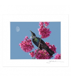 Tui in Cherry Blossom with Moon: 6x8 Matted Print