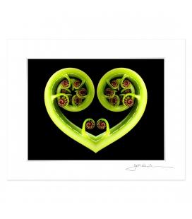 Koru Heart: 6x8 Matted Print