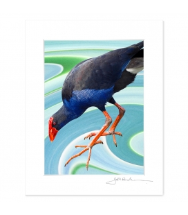 NZ Iconography, Wading Pukeko: 6x8 Matted Print