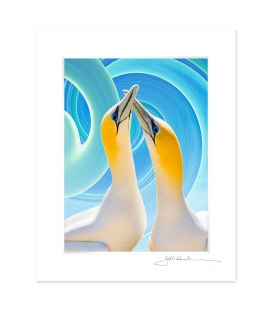 NZ Iconography, Gannet Couple: 6x8 Matted Print