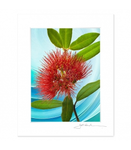 NZ Iconography, Pohutukawa Flower: 6x8 Matted Print
