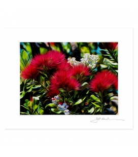 Pohutukawas, Early Summer: 6x8 Matted Print