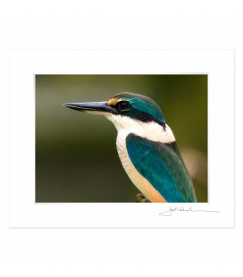 Sacred Kingfisher: 6x8 Matted Print