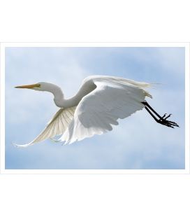 The flight of the White Heron: Card