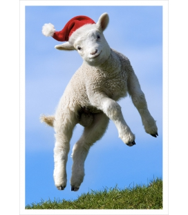 Leaping Lamb: Card