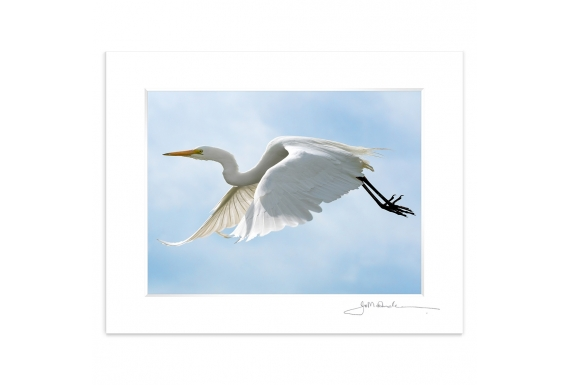 The flight of the White Heron: 6x8 Matted Print