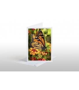 The Monarch Butterfly: Card