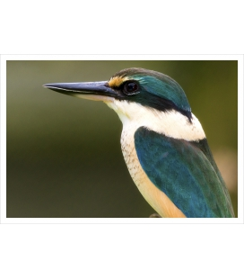 The Sacred Kingfisher: Card