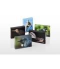 Kotare, the NZ Kingfisher