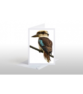 The (NZ) Laughing Kookaburra: Card