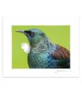 Tui Portrait closeup (landscape): 6x8 Matted Print