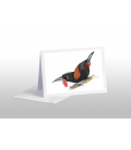 Saddleback, Tieke: Card