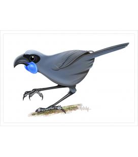 Kokako, blue-wattled crow: Card