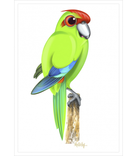 Kakariki, red-crowned parakeet: Card