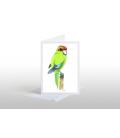 Kakariki, red-crowned parakeet: Card