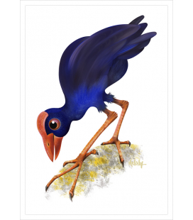 The Pukeko : Card