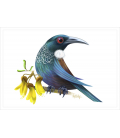 Tui with Kowhai flowers: Card